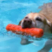 dog_swimming2_Puddle_edited.jpg