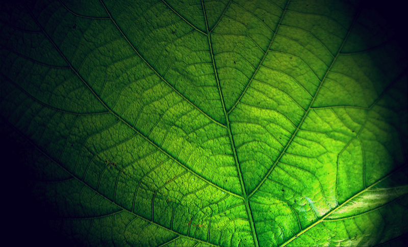 leaf_edited.png