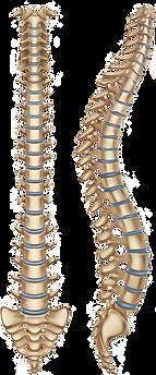 Full Spine (F/P)
