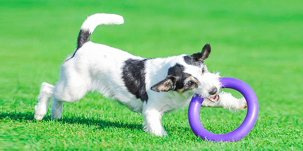 Puller Dog Sport Online Workshop (Part 1)