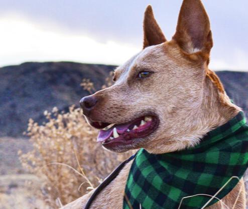 Mimi Green Dog Collars