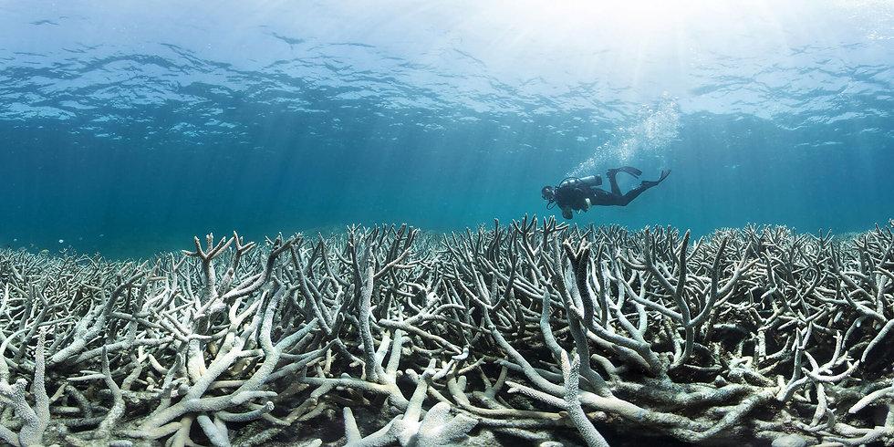 CoralBleaching1.jpg