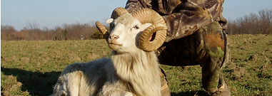 Kansas Exotic Ram Hunt