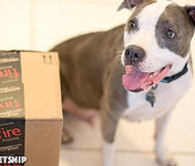 Puppy with gift box from Project PetSnip's Wish List
