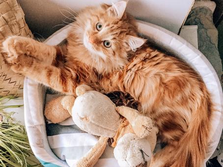 Как выйти из дома вовремя, если у вас есть котик?