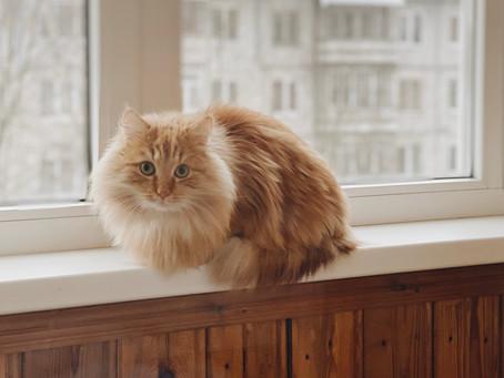 Год с кошкой/котом Сонечкой