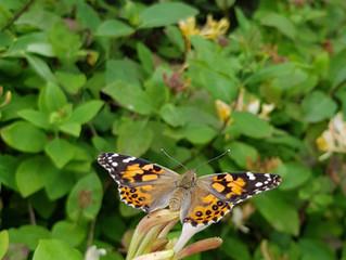 Flight of our Butterflies