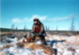 caribou2 (1).jpg
