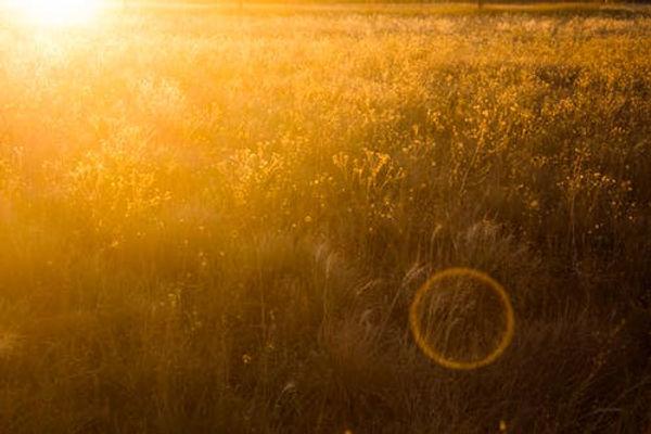 evening-sunset-field-yellow-688332.jpeg
