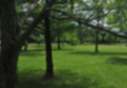 Beautiful gardens and 100 year old trees surround Gulf Coast Montessor Teache Eduation Center