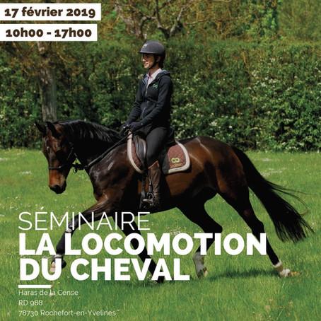 Séminaire : la locomotion du cheval