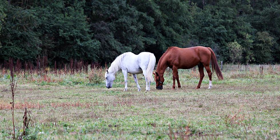 """Stage """"Les besoins fondamentaux des chevaux"""""""