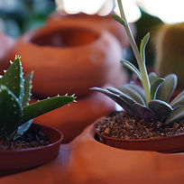 Plant Pop-Up.jpg