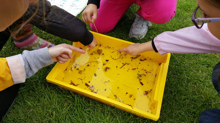 Avalon Camps pond dipping