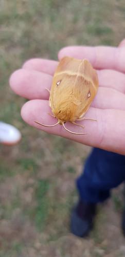 Avalon Camps Moths