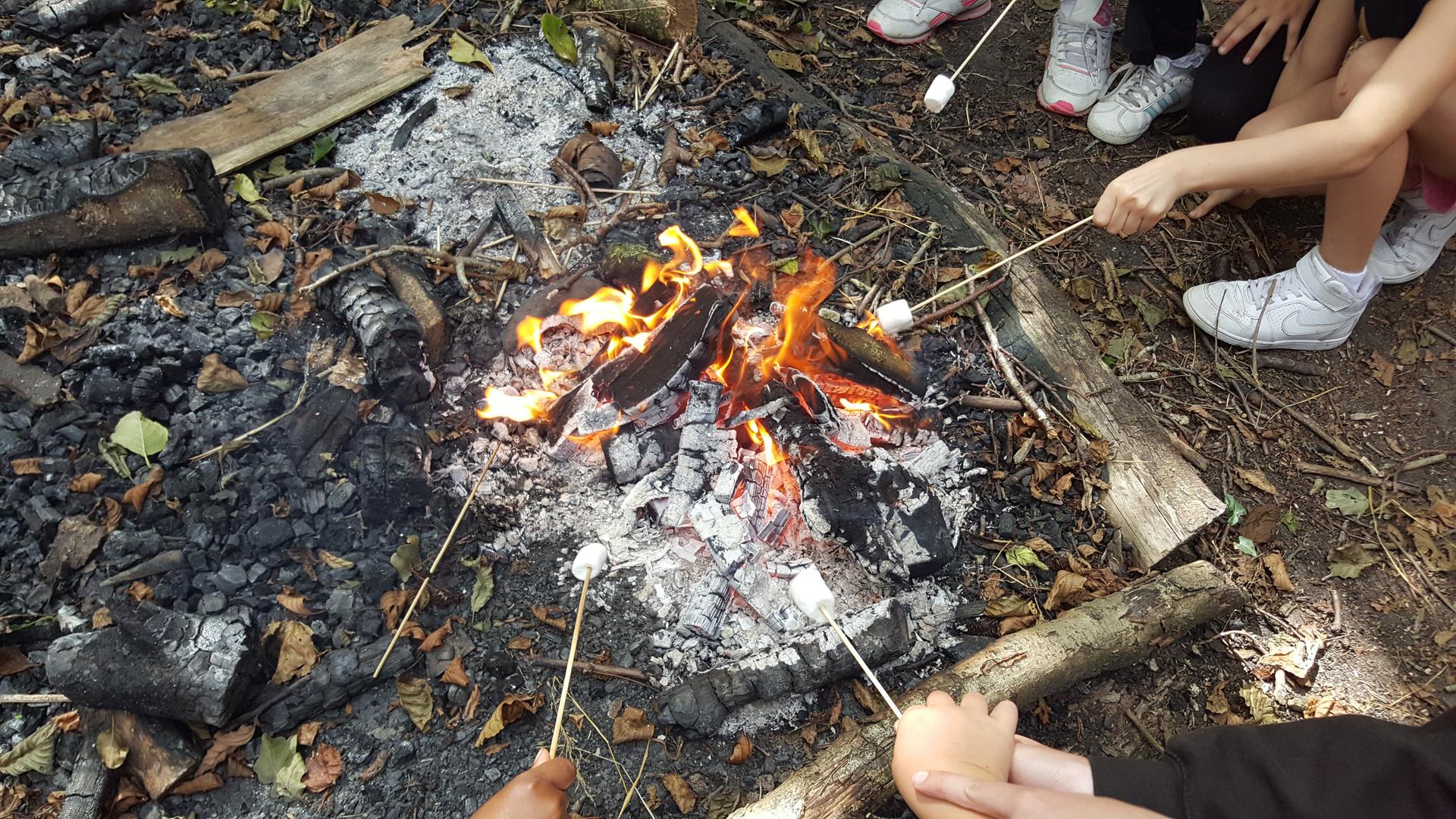 Avalon Camps marshmallows