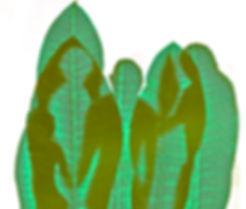 liscie postaci ziel.jpg