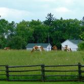 York Region Environmental Alliance
