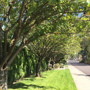 Private Property Tree By-Law -Coming Before Council - November 18, 2019