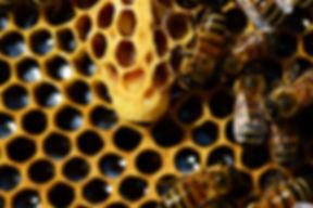 queen-cup-337699_640.jpg
