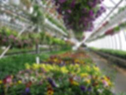 Patio Gardens.jpg