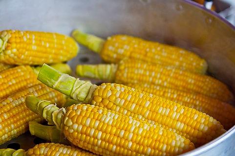 taber corn.jpg