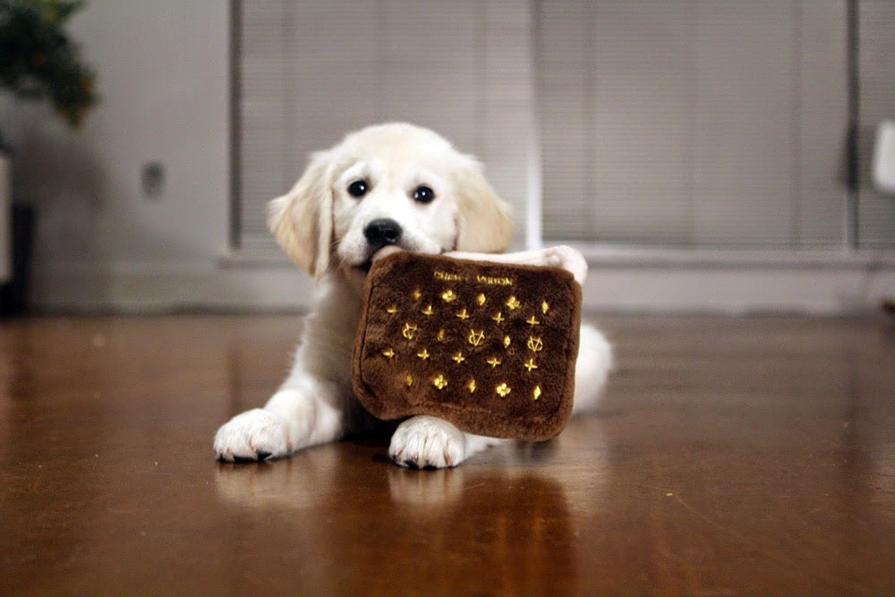 dog with stuffed louis vuitton novelty toy purse