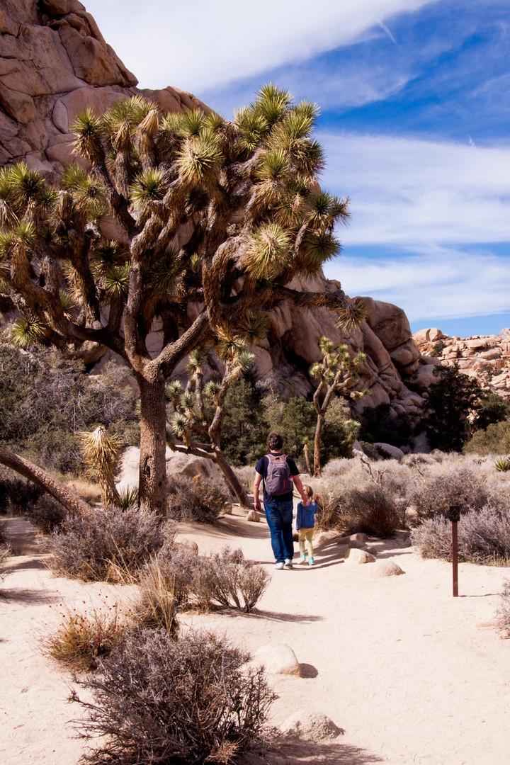 Joshua Tree National Park, Arizona, USA