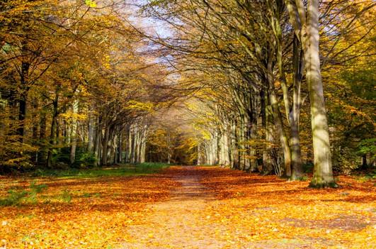 Felbrigg woods, Norfolk, UK