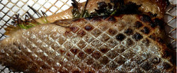 fish_web_new