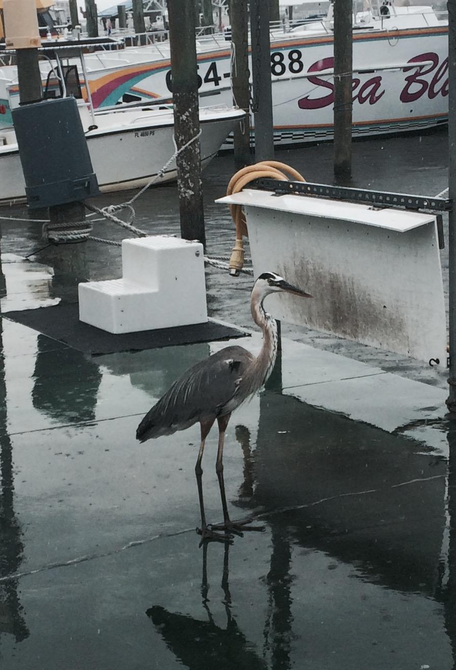 Bird on the Dock