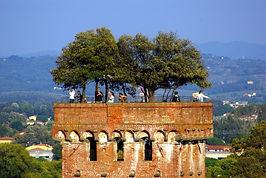 B&B Le Violette di Lucca | Bed and Breakfast centro Lucca | torre Guinigi