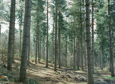 conifer-evergreen-forest-1767.jpg