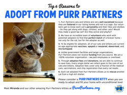 Why Adopt from Purr Partners