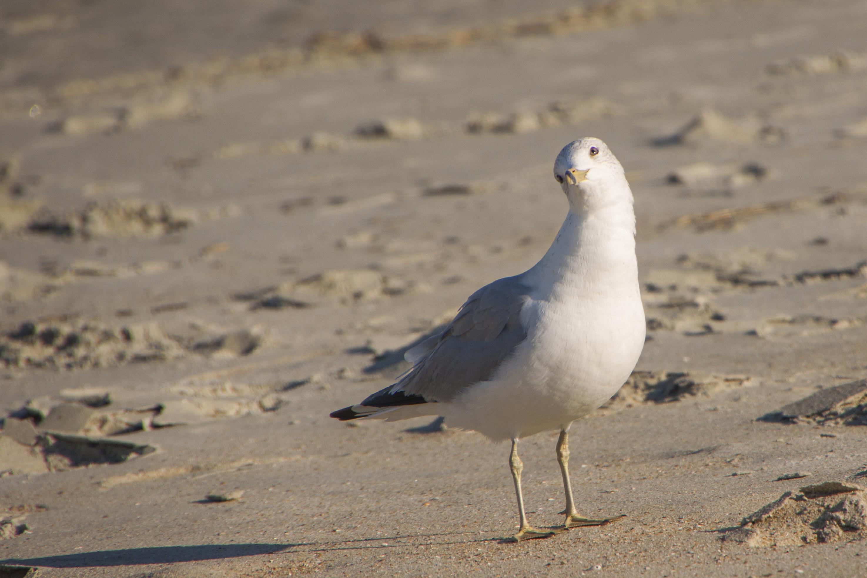 Weird Seagull