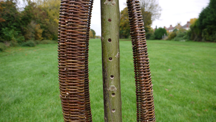 InsectH10.willowsculpture.spencerjenkins