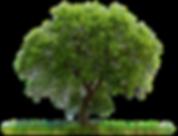 PNG_-_Árvore_2.png