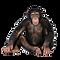 monkey_PNG18736.png