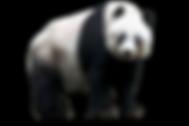 panda_PNG8.png