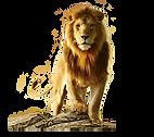 Lion_png_transparent.png