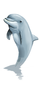 dolphin-2708695_960_720.png