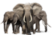 animal-png-hd-elephant-png-hd-1083.png