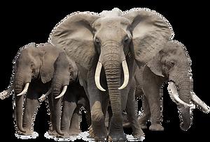 animal-png-hd-elephant-png-hd-1083.png