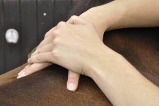 massage-cheval1.jpg