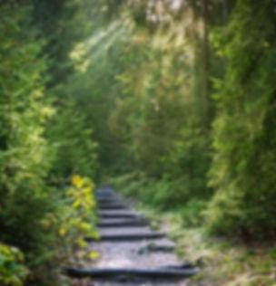 forest-2942477_640.jpg