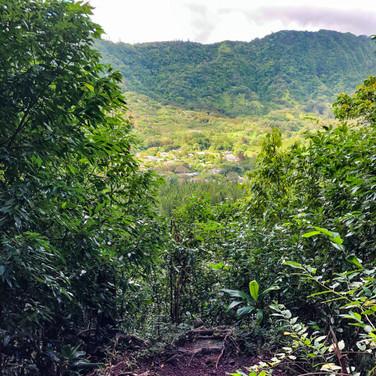 Judd Trail