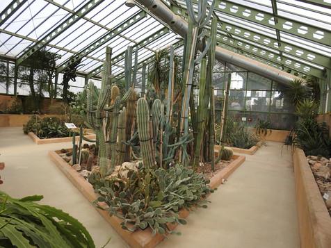 Colección de cactáceas en el invernadero de exposición - área seca