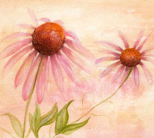 cone flower painting.jpg