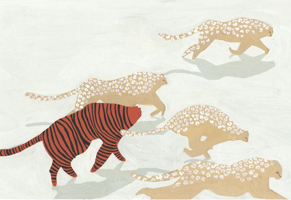 Tiger and Cheetahs
