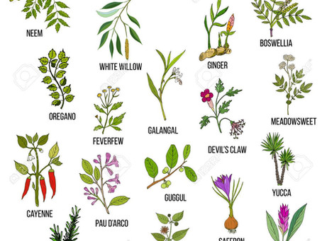 HERBS FOR JOINT PAIN: PART I